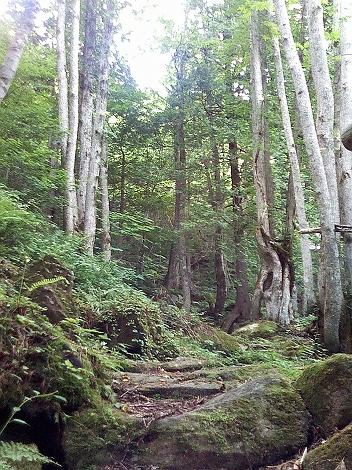 大倉百滝遊歩道2.jpg